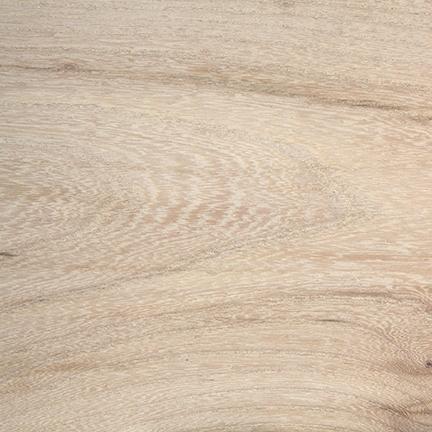 Snowy Elm Wood